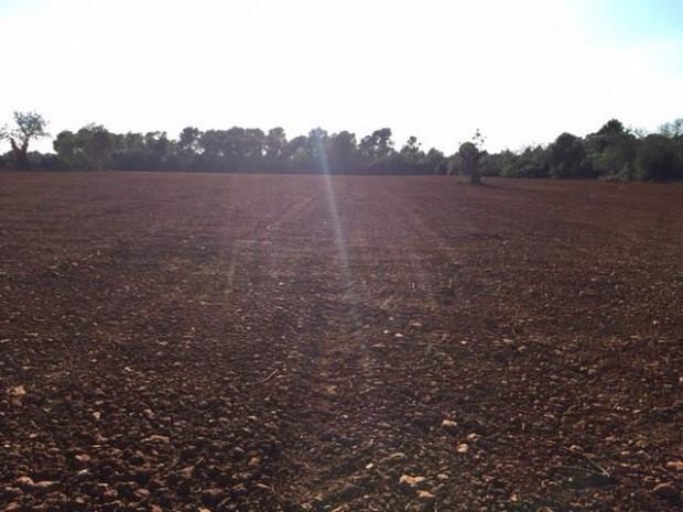 Solar en venda a Campos amb posibilitat de edificació a Campos. #4