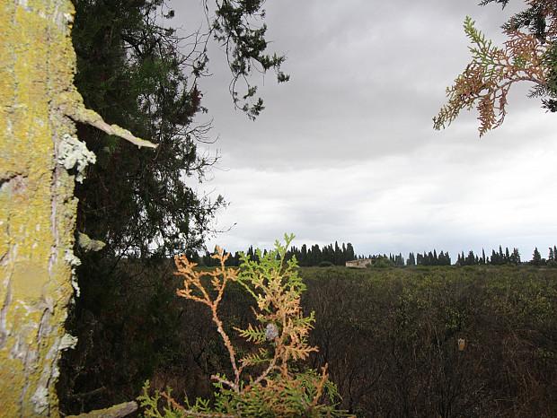 Finca rústica con extensión de 26.529m2, en las afueras de Inca #6